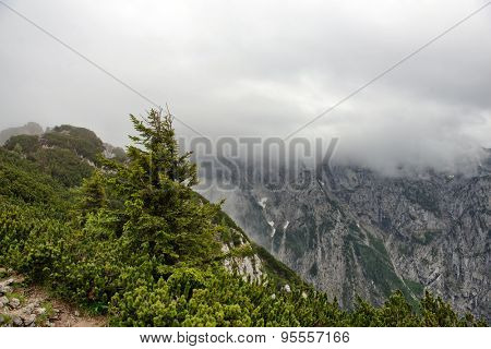Rocky mountain outcrop with low hanging cloud, fir trees and greenery visible in foreground