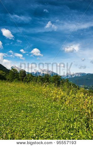 Close up of wild grassy meadow with trees and snow-capped mountains in backdrop beneath blue sky and white clouds