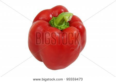 Bell Pepper Fresh Red