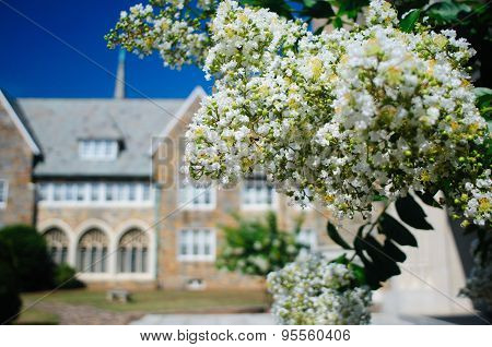 Southern Shrubs In Bloom