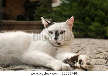 Cat lying on paved garden surface