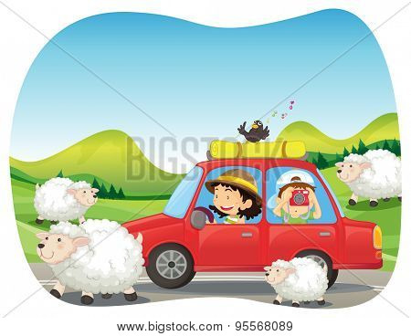 Roadtrip to the countryside with sheeps and field background