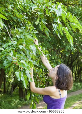 Girl Eats Mulberries From The Tree.