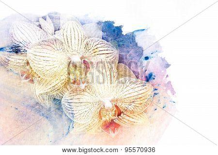 Flower Watercolor Illustration.