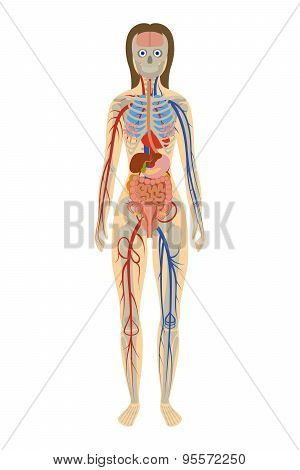 Illustration human anatomy of woman on white background