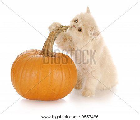 Kitten With Pumpkin