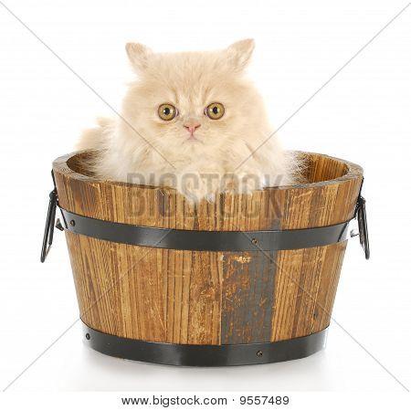Kitten Bath Time