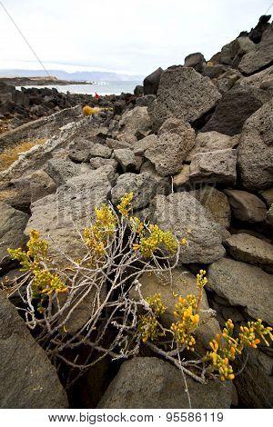 Flower Abstract Pond Water Coastline Salt In  Lanzarote
