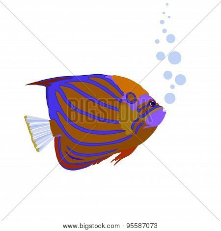 Bright Coral Angelfish