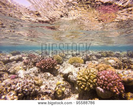 Colourful Underwater Coral Reef