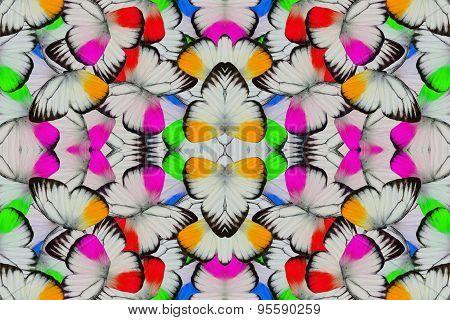 Male Orange Gull Butterfly (cepora Iudith)