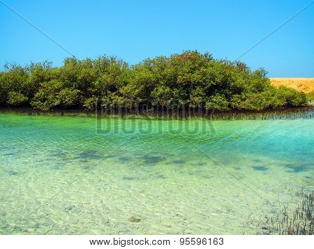 Green mangrove grove in Egypt