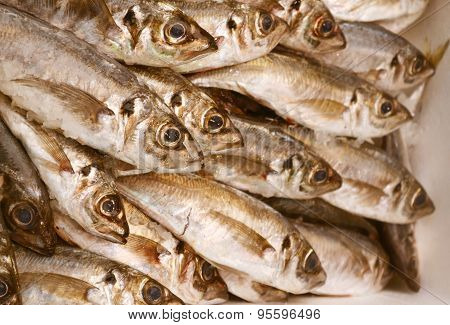 Uncooked trout with other kinds of fish in ice