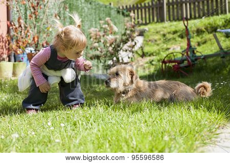Baby Approaching A Dog