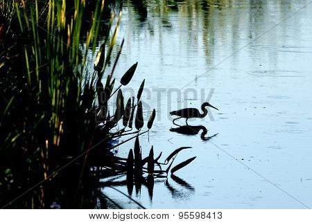 Silhouette Of Heron In Water.