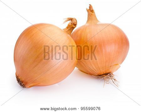Two Onion Bulbs Isolated On White Background