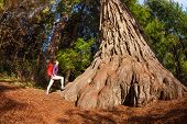 image of redwood forest  - Woman with backpack standing near the big tree in Redwood California during summer sunny day fisheye view from below - JPG