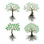 Set Of Trees And Roots. Oak And Olive Trees. poster