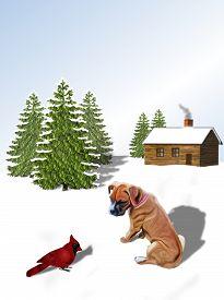 stock photo of cardinal-bird  - Boxer pup and red cardinal bird on snow - JPG