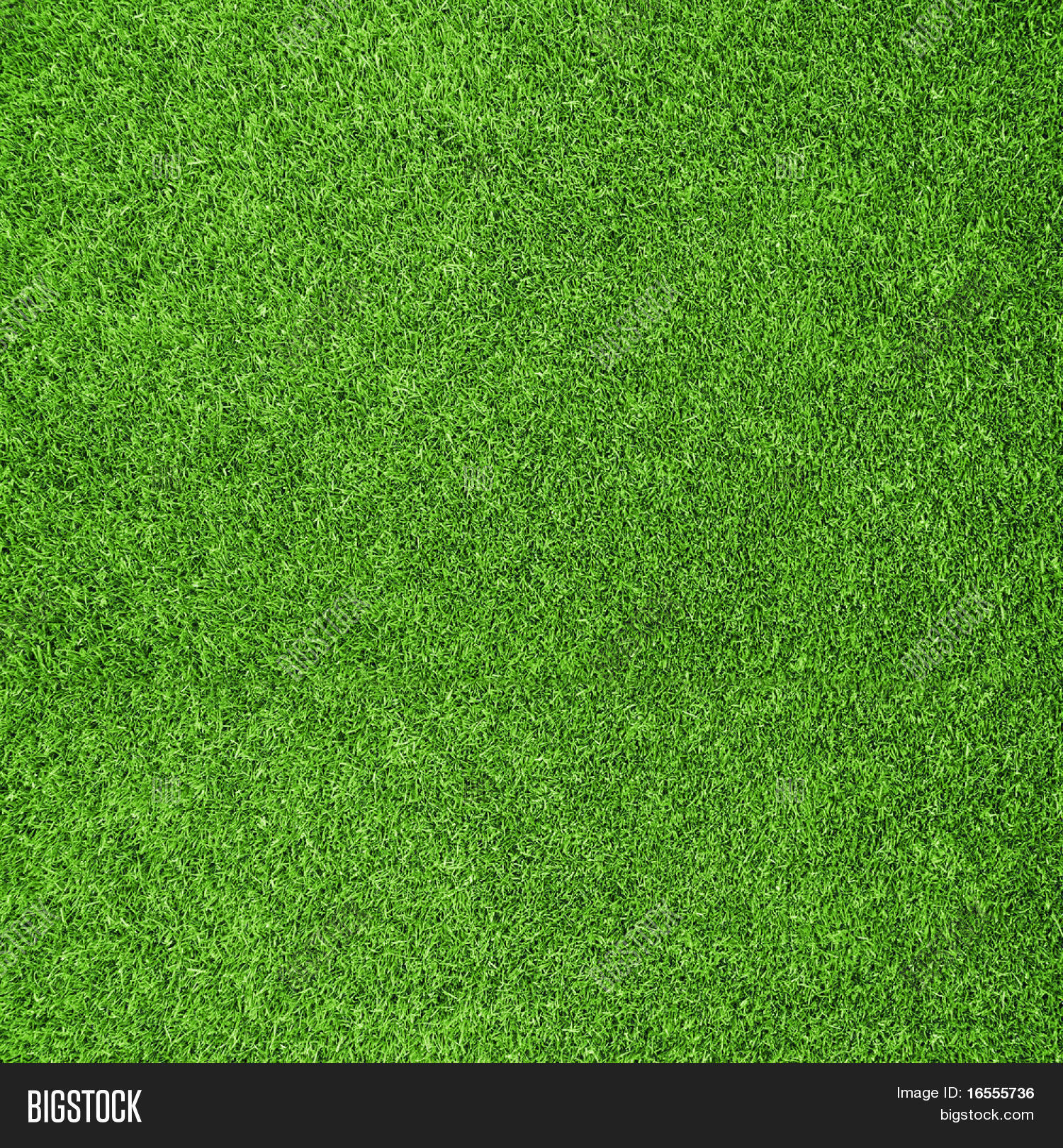 Beautiful green grass texture from golf course Stock Photo ...