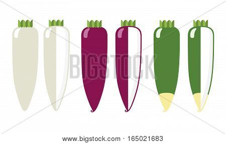 Root vegetables: radish white color and green a general view and in section on a white background