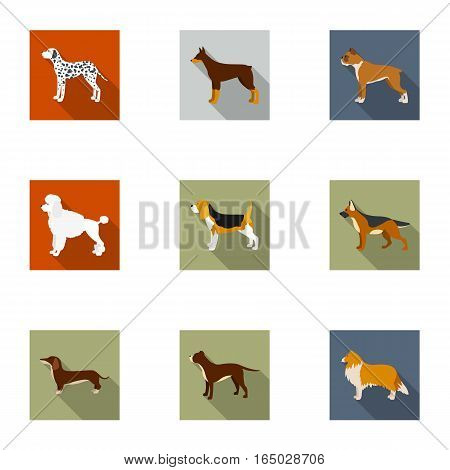 Dog breeds set icons in flat style. Big collection of dog breeds vector symbol stock
