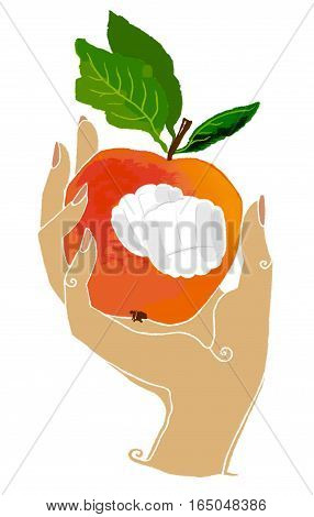The hand keeps the apple on a white background