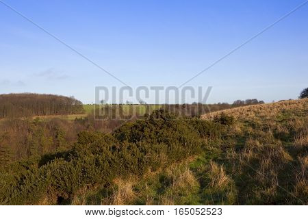 Gorse And Dry Grasses