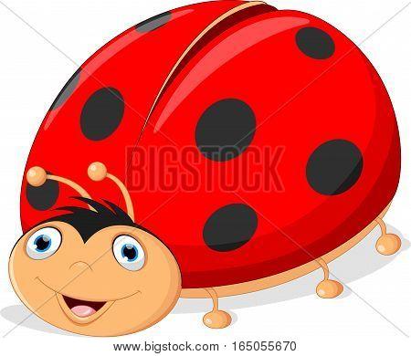 Vector illustration of cute ladybug cartoon isolated on white background