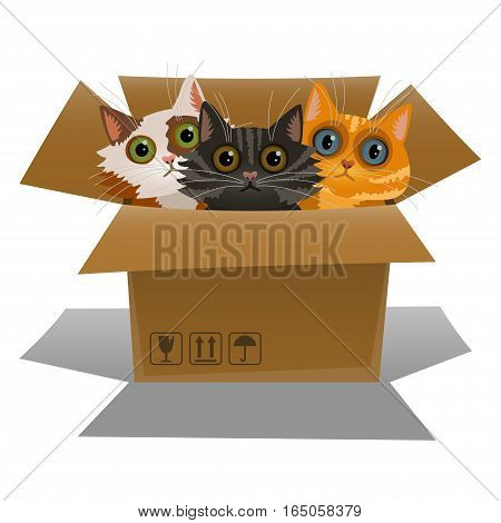 Little kittens in a cardboard box. Three cats is looking out of a box. Vector illustration