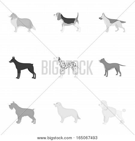 Dog breeds set icons in monochrome style. Big collection of dog breeds vector symbol stock