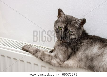 Cat Relaxing On A Warm Radiator