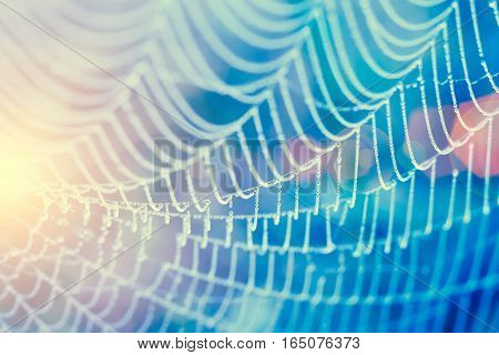 Soft focus of drops of dew on spider wave in morning with sunlight and flare. Vintage filtered.