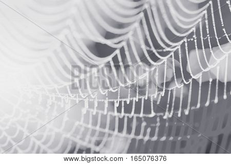 Spider Web With Rain Drop In Monochrome. Abstract Background. Connection Concept.