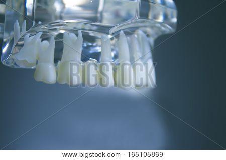 False teeth sample for dentists. No people
