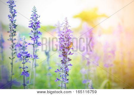 Beautiful Lavender Flower