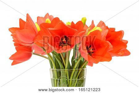 Red Tulips Flowers In A Vibrant Transparent Vase, Close Up, Isolated, White Background.