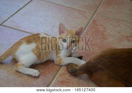 Cat White Golden Playing Queue Dog Surprising