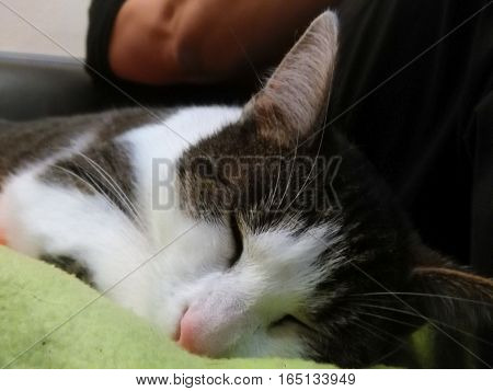 Sleeping cat on a calm winter afternoon