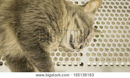 Gray Stray Cat Sleeping At The Bus Station