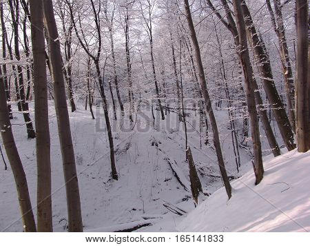 Snowy forest at sunset. Ravine in the forest.