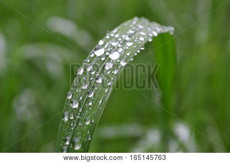 Rain drops on a blade of grass