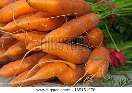 Fresh bunches of carrots at a farmers market.