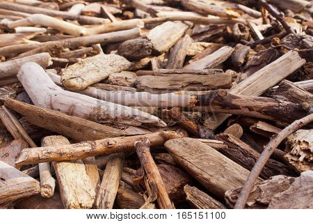 Close up of small pieces of driftwood.