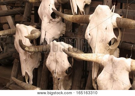 Cattle skulls hanging on a rack for sale in Santa Fa