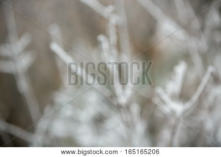 Christmas background, trees in frost. blurred  bokeh