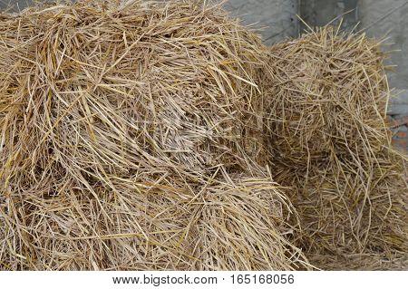dry straw bale for feeding farm animal in barn