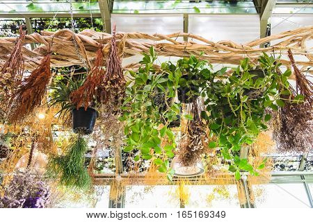 various plant and dry flower hanging on vine decoration