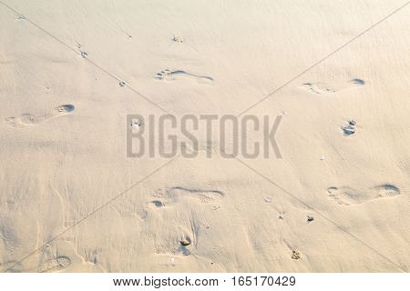 human footprints in sand on the beach