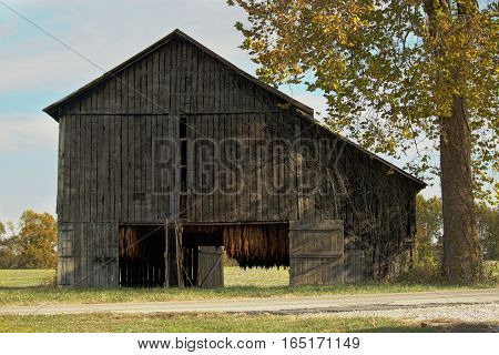 Barn with doors open to allow air circulation for curing the tobacco. This is a common late summer and fall sight in western Kentucky.